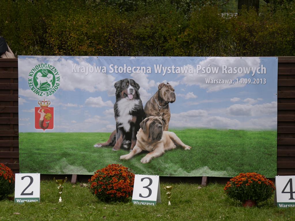 _1080431_warszawska140913