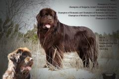 IDEAL CHOCOLATE MATE DU ROYAUME DES GRANDS VENTS_stud_dog_s